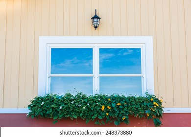 Beautiful Planter outside a Window with Spring Petunia Flowers and Hosta Leaves