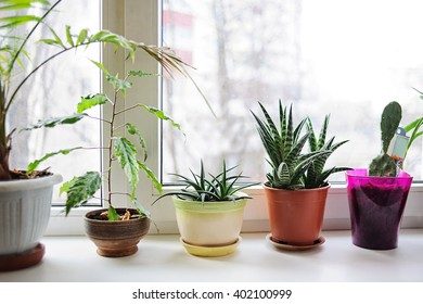 Beautiful plants  in flowerpots on windowsill at home.