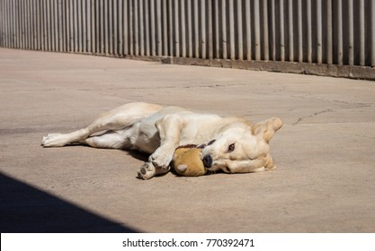 beautiful playful dog
