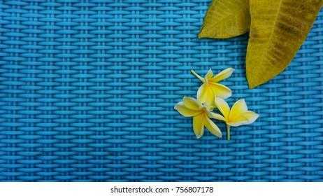 Beautiful Plumeria Alba