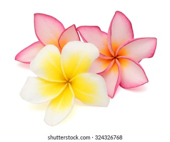 beautiful plumeria rubra flower isolated on White background