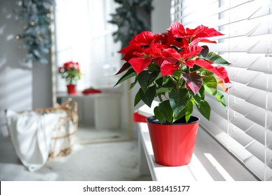 Beautiful poinsettia in pot on window sill at home, space for text. Traditional Christmas flower