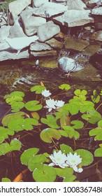 Beautiful pond background