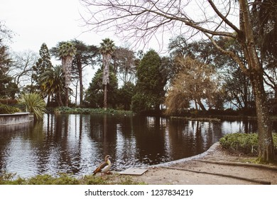 beautiful pond in the middle of a large park in Oporto where you can see the tall trees and animals walking around the place