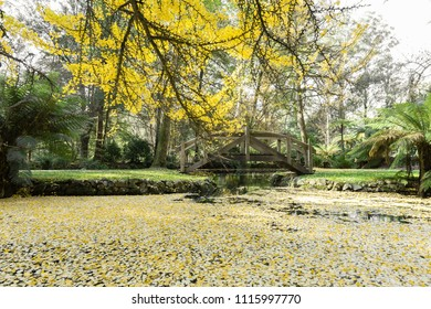 Beautiful pond with small islands and footbridges surrounded with golden trees in Autumn, Melbourne, Australia
