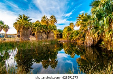 Beautiful pond in the Thousand Palms Oasis Preserve in the Coachella Valley Preserve, Palm Springs