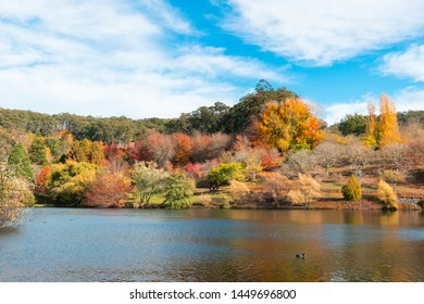 Beautiful pond view with autumn trees at Mt Lofty botanical garden. Adelaide, South Australia.