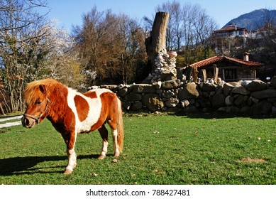 A beautiful pony at Vatsounia village. Thessaly region, central Greece.