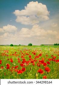 Beautiful poppy field