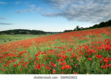 Beautiful poppy field landscape at sunset on South Downs