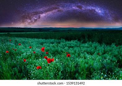 beautiful poppy field and milk way night sky