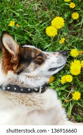Beautiful portrait of a adorable dog in background of yellow dandelions