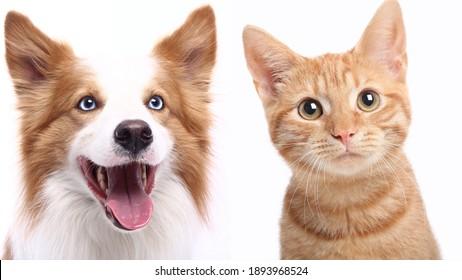 Schönes Porträt von verliebten Haustieren