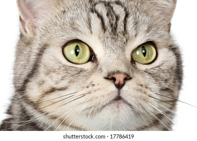 Beautiful portrait of a cat face on white background