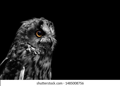 Beautiful portrait of an owl on a dark background