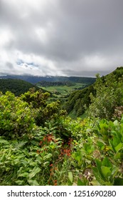 Beautiful portrait view of plant life along the edge of the Sete Cidades caldera in Sao Miguel.