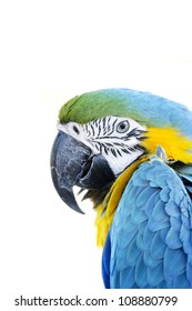 A beautiful portrait of a yellow,blue and green bird or macaw in studio on an white isolated background looking or staring at the camera