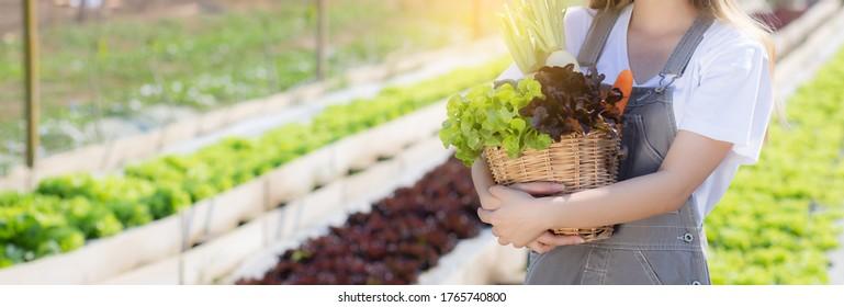 Schöne porträtierte junge Asiatin erntet und nimmt frische Bio-Gemüsegarten in Korb im Hydroponischen Bauernhof, Landwirtschaft für gesundes Essen und Geschäftskonzept, Banner-Website.