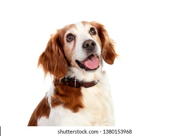 Beautiful portraits of a dog isolated on a white background