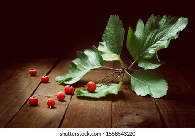 The beautiful position of mountain ash with leaves attracts the attention of the viewer.