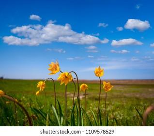 beautiful prairie flowers, natural background