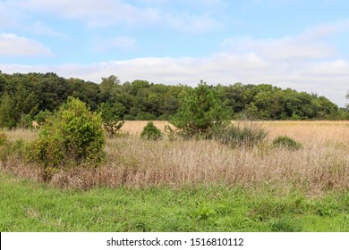 Beautiful prairie landscape in central Illinois
