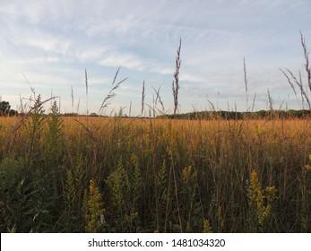 Beautiful Prairie, William O'Brien State Park, Minnesota