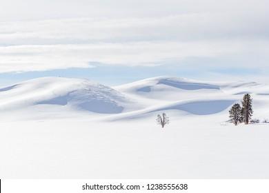 Beautiful pristine snow scene in Yellowstone in winter