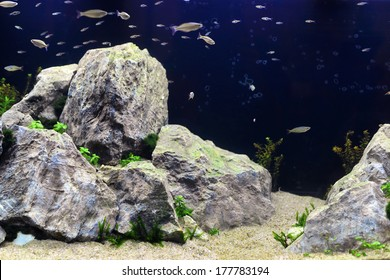 A beautiful professional aquarium with large rocks and many fish