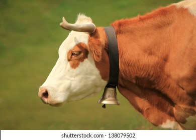 Profile Of Cow Head Stock Photo - Image: 2728710 |Dairy Cow Head Profile