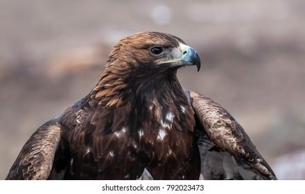 Beautiful and proud eagle.