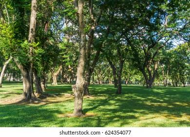 Beautiful Public green park in Autumn at Bangkok, Thailand