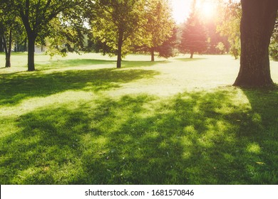 Beautiful public park on the sunshine. The shadow of the tree on a sunny day. Nature summer landscape. Selective focus and blurred background.