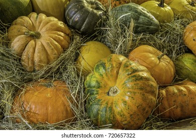 Beautiful pumpkins different sizes on the hay in waiting for halloween holiday.