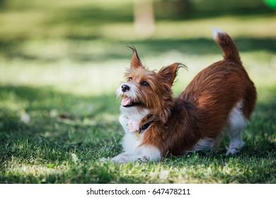 Beautiful puppy enjoying outdoors.