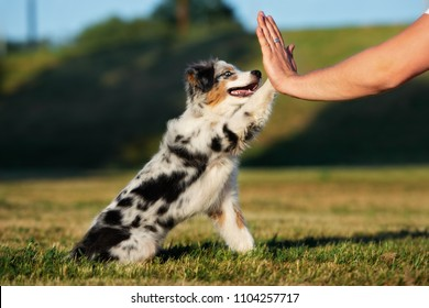 Beautiful puppy gives paw to owner