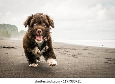A beautiful puppy. Mine.