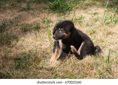 Beautiful puppy sitting on the grass