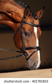 Beautiful purebred dressage horse looks at viewer from his dark stable