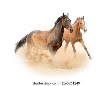 Beautiful purebred horses running on the wild