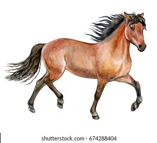 Beautiful purebred red horse isolated on white background. Watercolor. Illustration. Template. Picture. Image