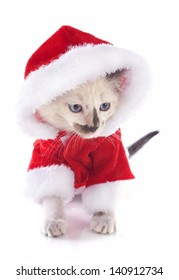 beautiful purebred siamese kitten dressed in front of white background