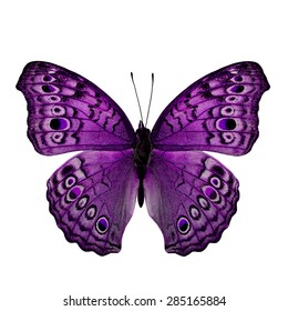 Beautiful Purple Butterfly back wing profile in fancy color isolated on white background