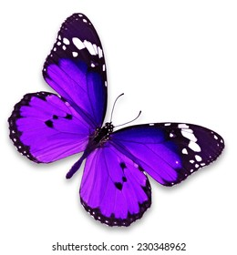 Beautiful purple butterfly isolated on white background