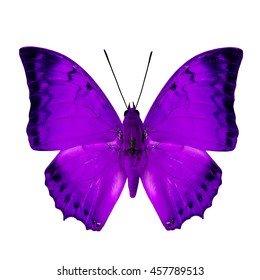 Beautiful purple butterfly, the Malay Rajah (Charaxes distanti) in fancy color profile isolated on white background, exotic nature