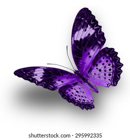 Beautiful Purple butterfly upper wing profile flying up