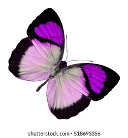 Beautiful Purple butterfly upper wing profile isolated on white background