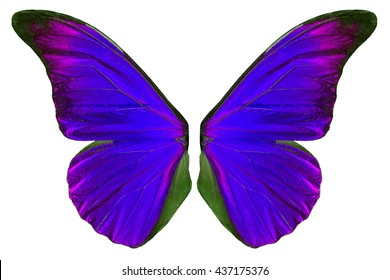Beautiful purple butterfly wings isolated on white background.