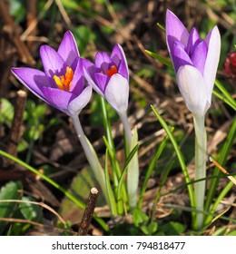 Spring Bloomer Images Stock Photos Vectors Shutterstock