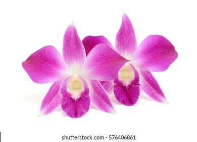 beautiful purple dendrobium orchid flowers isolated on white background